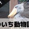 【のいち動物園】ハシビロコウに会える動物園は珍しい