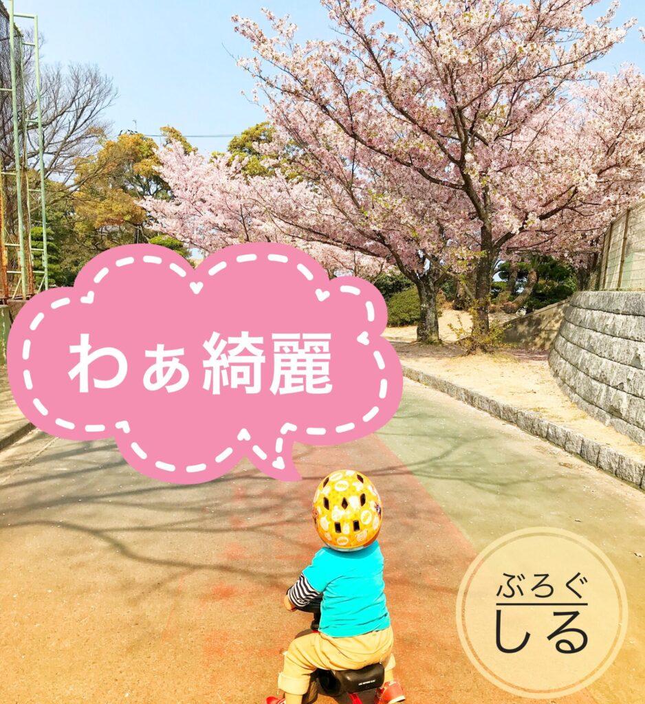伊予三島運動公園の桜