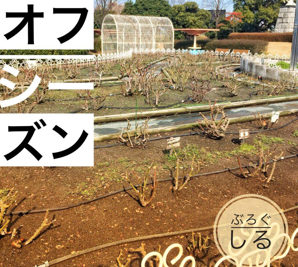 伊予三島運動公園のバラ(オフシーズン)