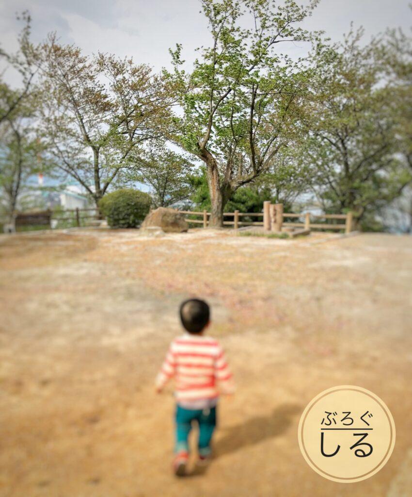 川之江城の桜(散ったあと)