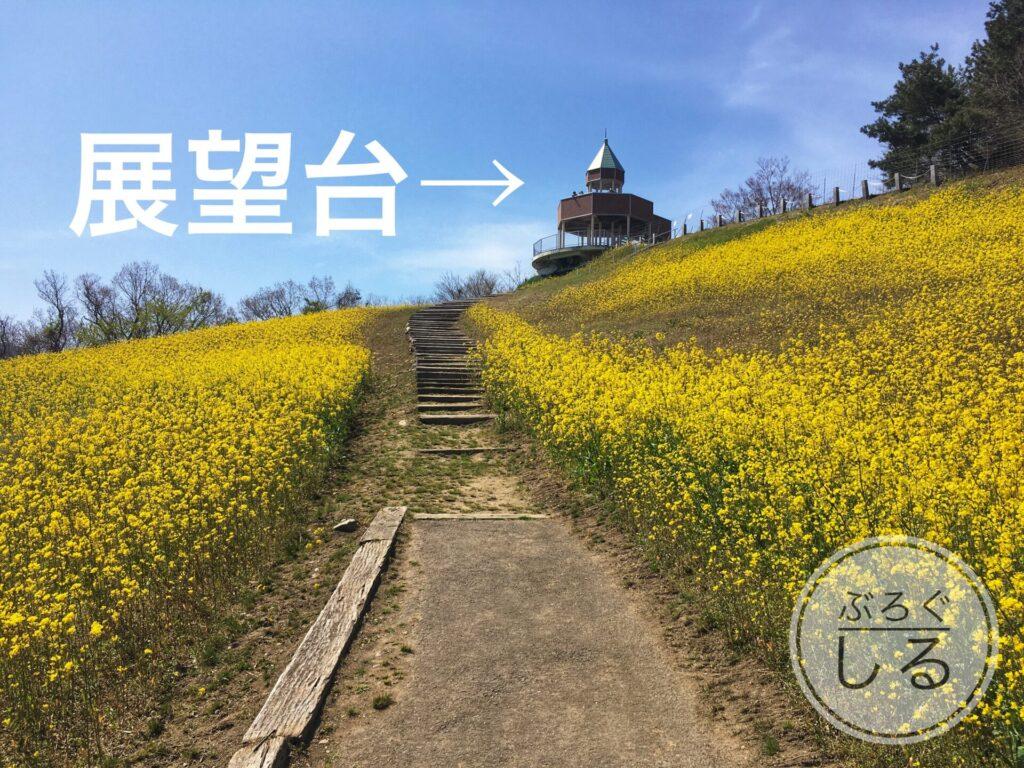 翠波高原の展望台