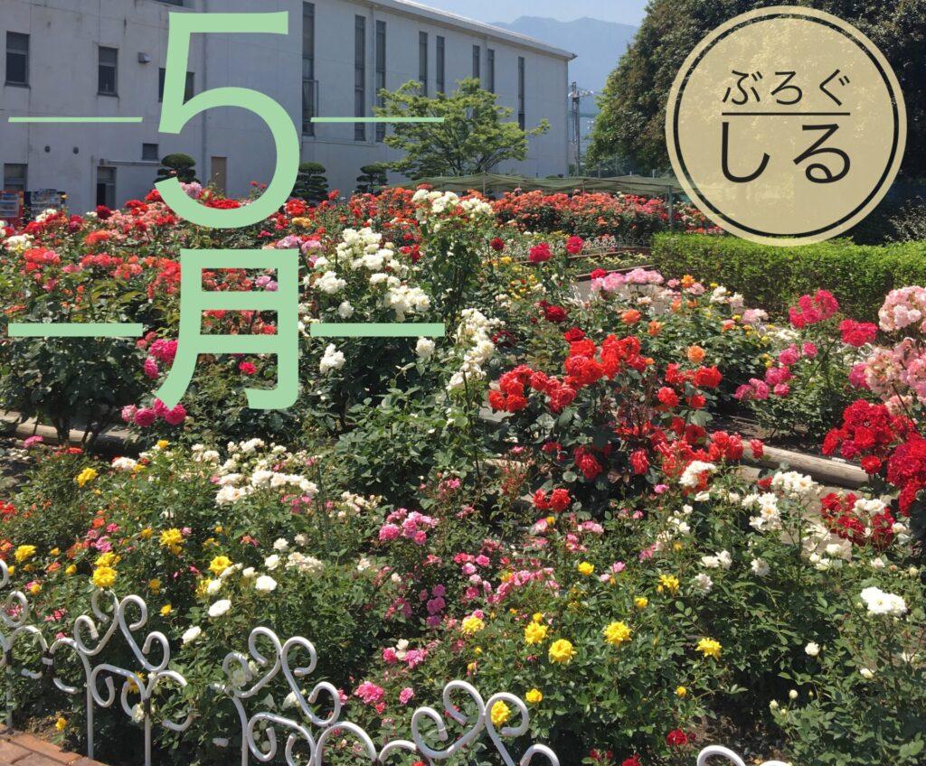 伊予三島運動公園のバラ園