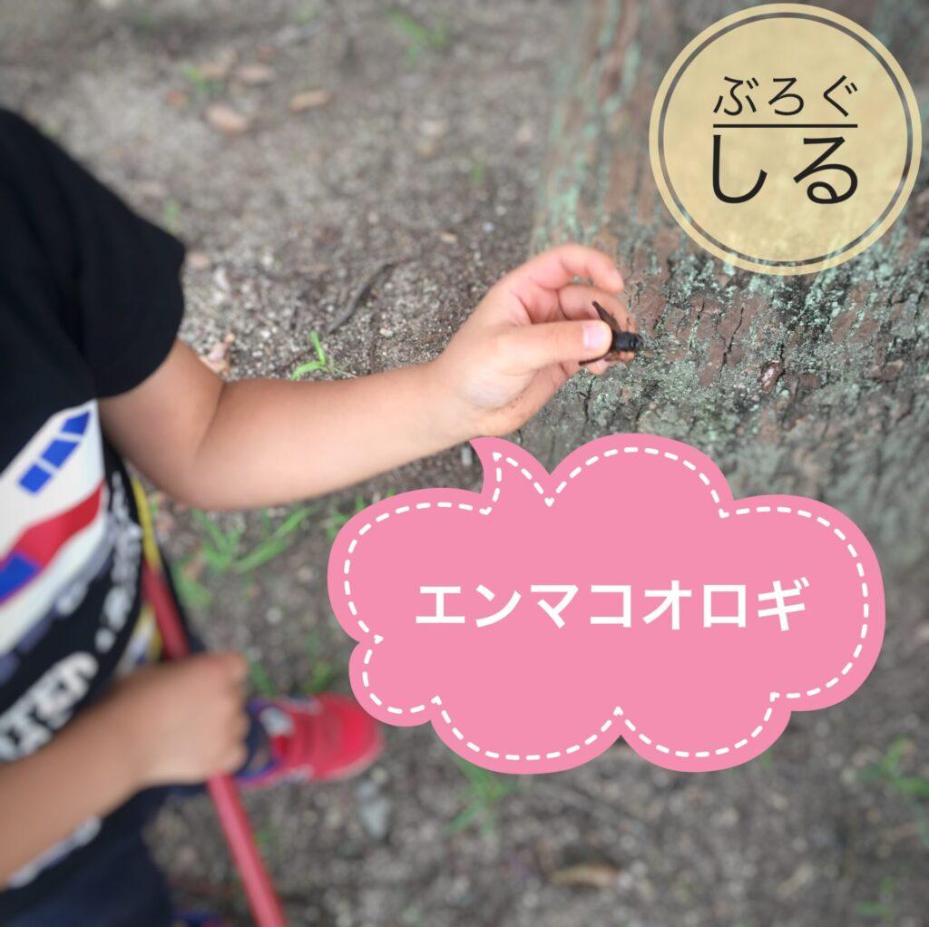 伊予三島運動公園で虫採り